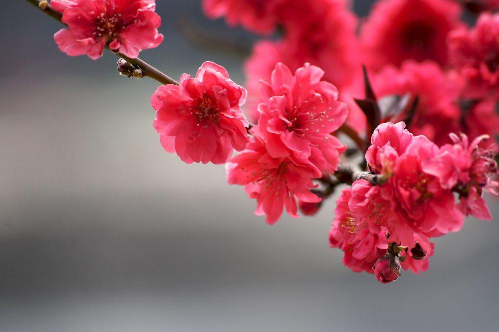 beautiful-bloom-blooming-531731